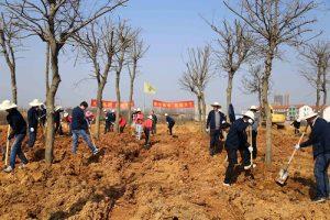 植树造林保水剂