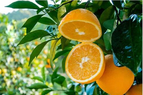 橙子保水剂