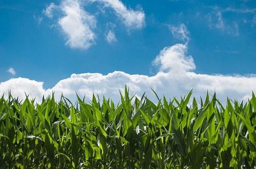 玉米保水剂