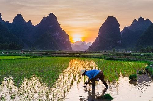 稻田种植保水剂