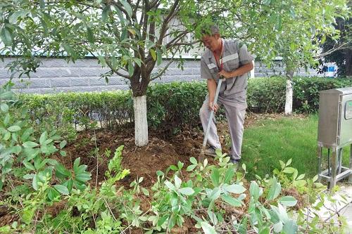 苗木移栽保水剂