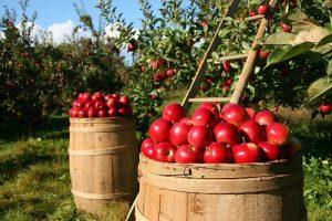 苹果树保水剂