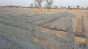 Pakistan-corn-agricultural-grade-sap-2