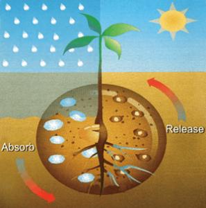 Super-Absorbent-Polymer-For-Plants