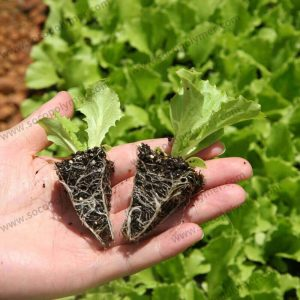 Super-Absorbent-Polymer-For-Plants