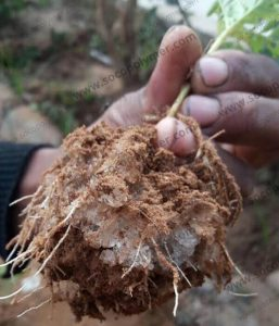 Super Absorbent Polymer in Agriculture