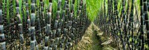 farming-super-absorbent-polymer