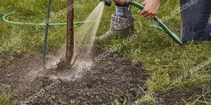 林业保水剂使用方法