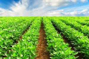 sap-polymer-agriculture