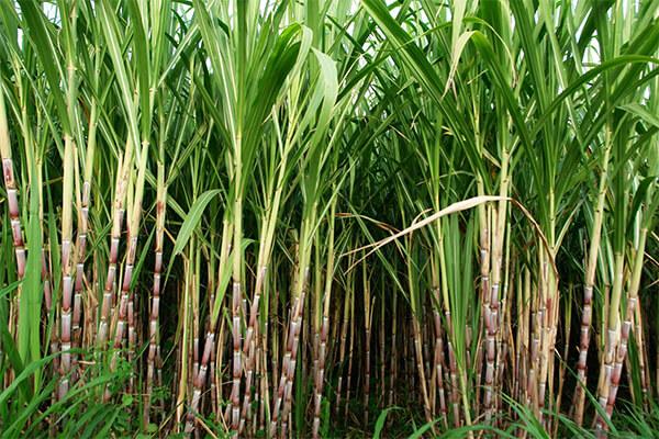 SOCO® 保水剂在大规模农业中也显示优势